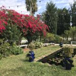Moodlight Garden